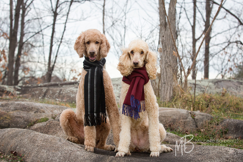 Ottawa_Pet_photography
